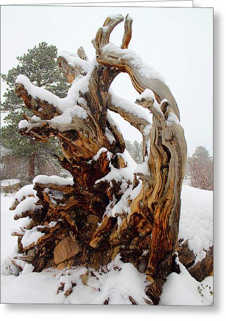 Snowy Roots 2 Greeting Card
