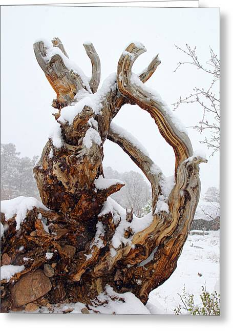 Snowy Roots Greeting Card