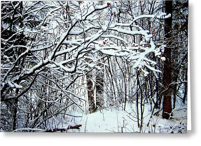 Snowy Silence Greeting Card by Shirley Sirois