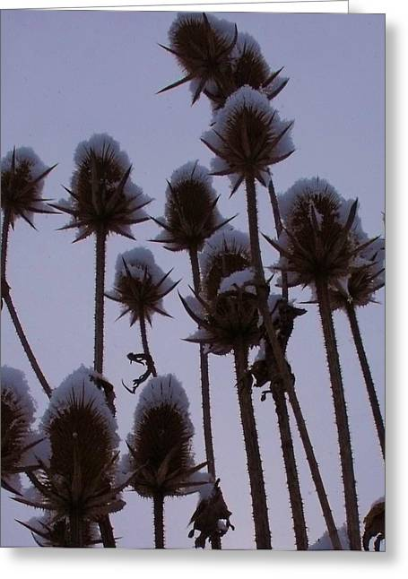 Snowy Spikes Greeting Card