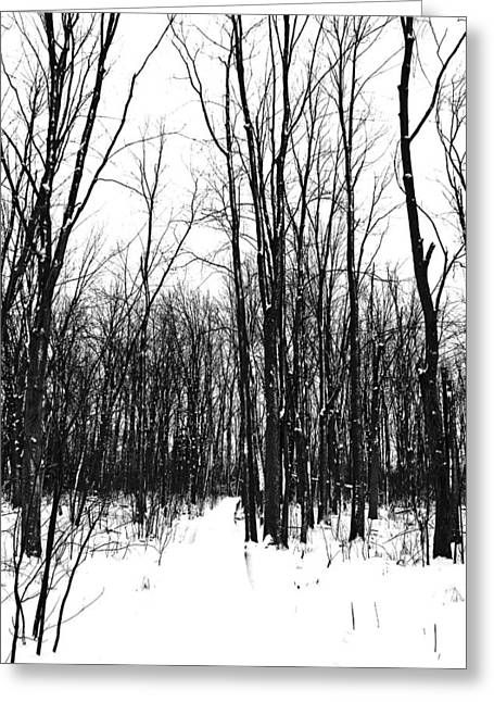 Snowy Trail Through The Woods Greeting Card by Debbie Oppermann