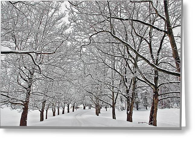 Snowy Treeline Greeting Card