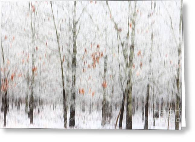 Greeting Card featuring the photograph Snowy Trees Abstract by Benanne Stiens