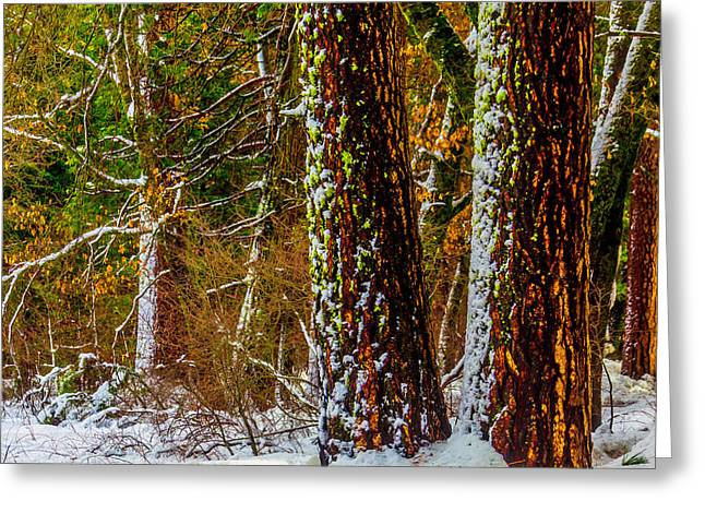 Snowy Trees Greeting Card by Garry Gay