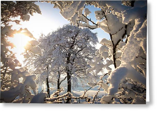 Snowy Trees Greeting Card by RKAB Works