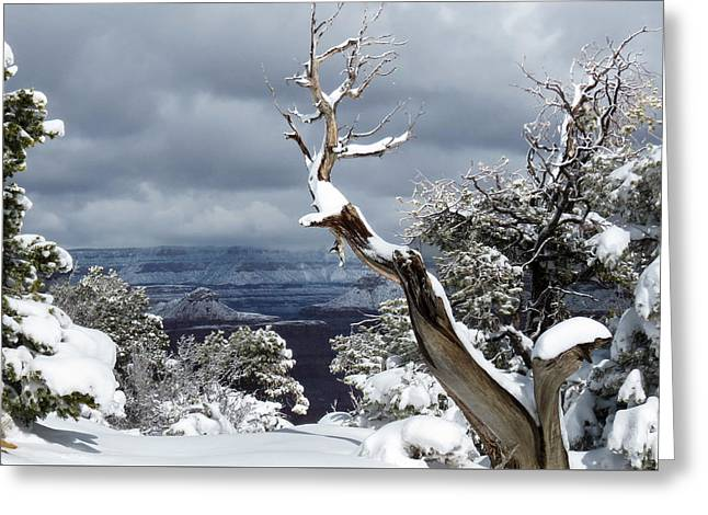 Greeting Card featuring the photograph Snowy View by Laurel Powell