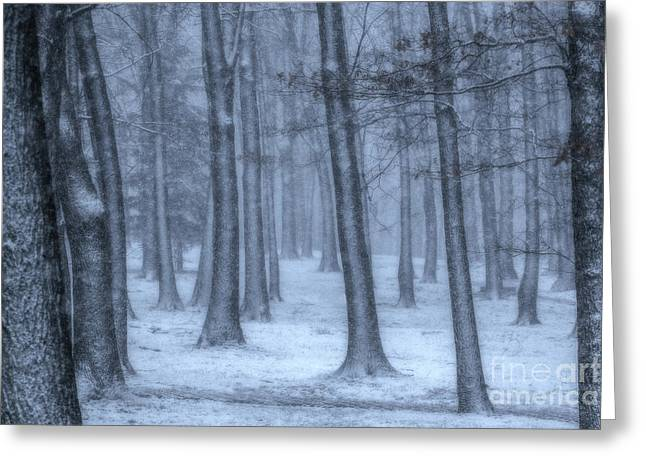 Snowy Winter Woods Greeting Card by Randy Steele