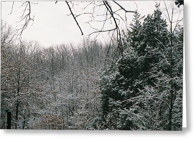 Snowy Woods Greeting Card by C E McConnell