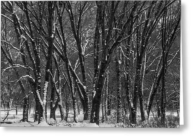 Snowy Yosemite Woods In Black And White Greeting Card