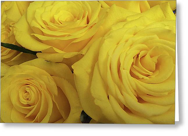 Snuggling Yellow Roses Greeting Card by Sarah Vernon