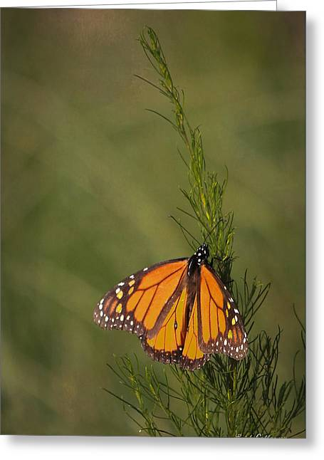 So Far To Go Monarch Butterfly Greeting Card by Reid Callaway