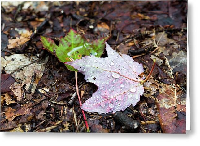 Soaken Leaves Greeting Card