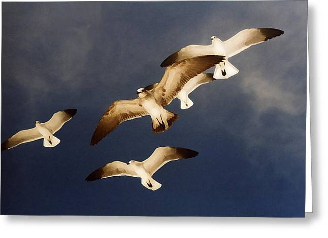 Soar Greeting Card by Ginger Howland
