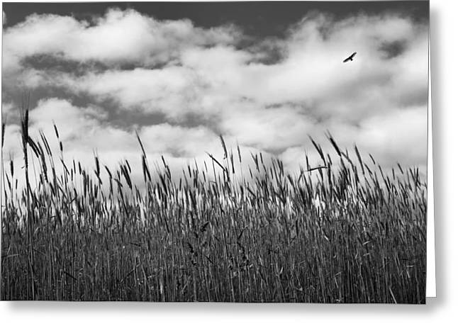 Soaring Bw Greeting Card by Bill Wakeley