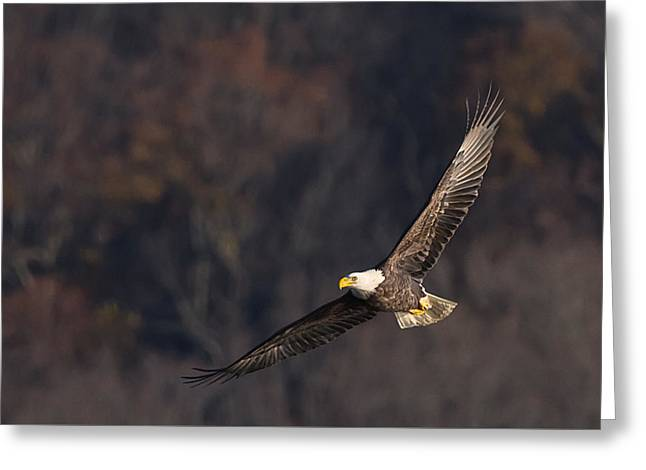 Greeting Card featuring the photograph Soaring by Cindy Lark Hartman