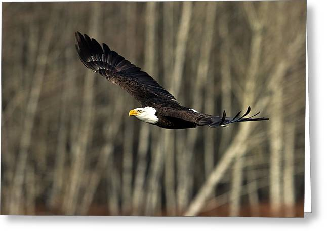 Soaring Glory Greeting Card