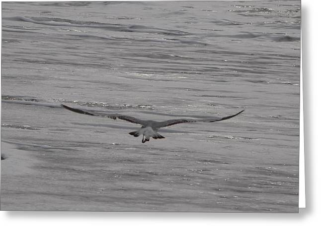 Soaring Gull Greeting Card