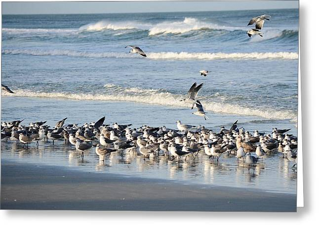 Soaring Gulls In The Surf Greeting Card by Patricia Twardzik