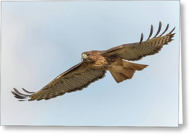 Greeting Card featuring the photograph Soaring Hawk 2 by Angie Vogel