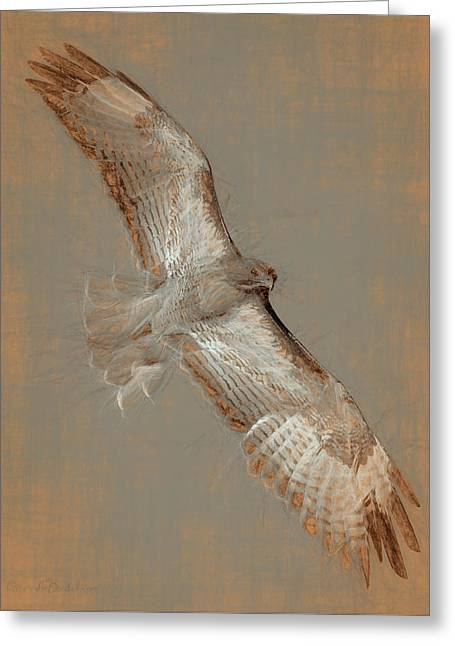 Soaring Hawk  Greeting Card by Chris LeBoutillier