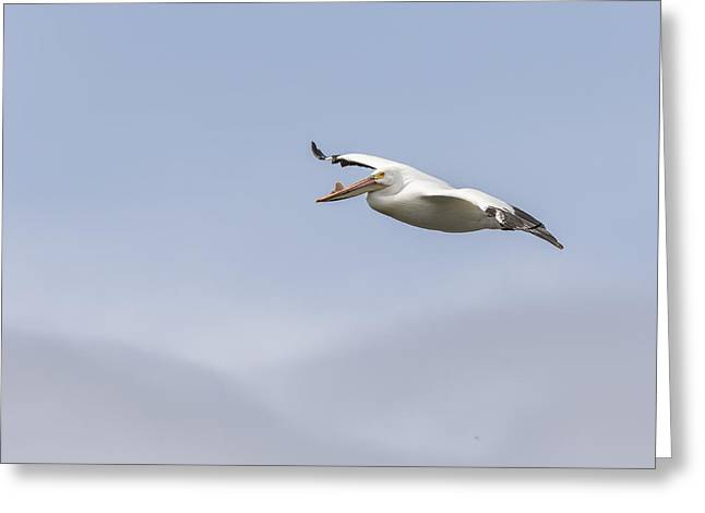 Soaring In The Skies Greeting Card by Thomas Young