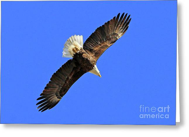 Soaring Into The Blue  Greeting Card