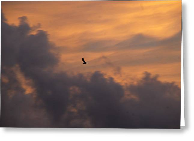 Greeting Card featuring the photograph Soaring Into The Sunset by Richard Bryce and Family