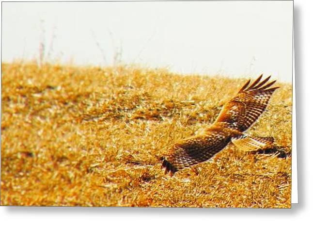 Soaring Just Beyond The Ridge Greeting Card by Honey Behrens