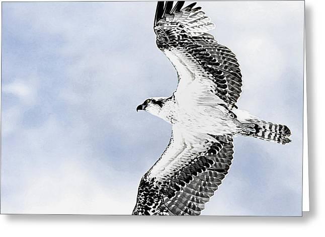 Osprey Florida Greeting Cards - Soaring Osprey Art Greeting Card by Deborah Benoit