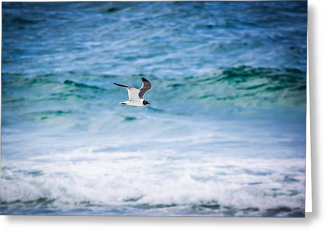 Soaring Over The Ocean Greeting Card by Shelby Young