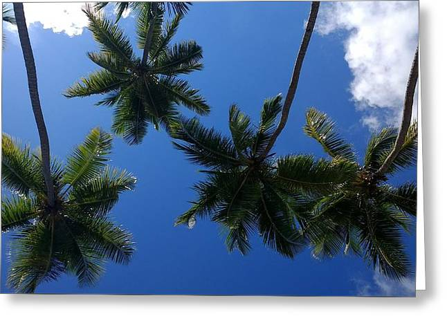 Soaring Palms Greeting Card by Sheryl Chapman Photography