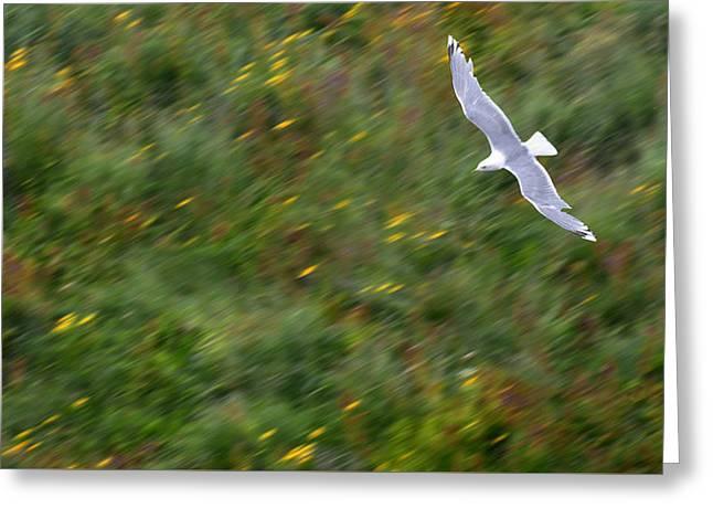 Greeting Card featuring the photograph Soaring Seagull by Joe Bonita