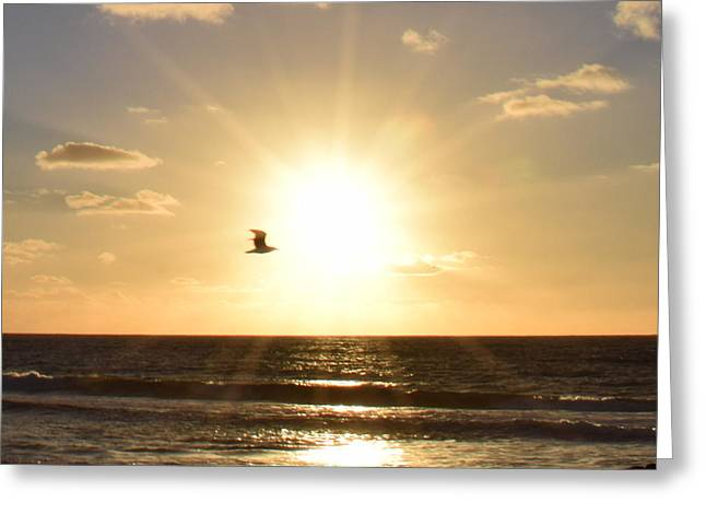 Soaring Seagull Sunset Over Imperial Beach Greeting Card