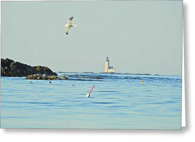 Soaring Seagull Greeting Card