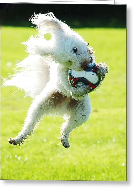 Soccer Dog-3 Greeting Card
