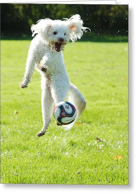 Soccer Dog-5 Greeting Card