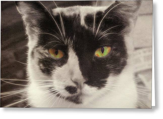 Socks Greeting Card by JAMART Photography