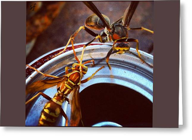 Soda Pop Bandits, Two Wasps On A Pop Can  Greeting Card