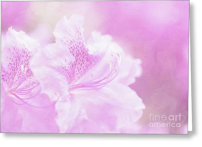 Soft And Lovely Pink Rhododendrons  Greeting Card