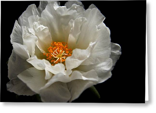 Greeting Card featuring the photograph Soft And Pure by Judy Vincent