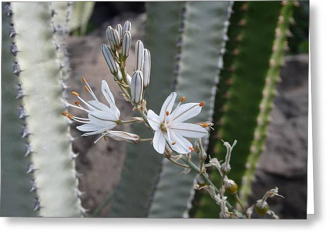 Pretty And Prickly - Beautiful White Flower Greeting Card
