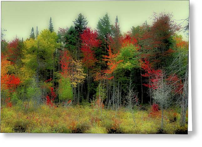 Greeting Card featuring the photograph Soft Autumn Panorama by David Patterson