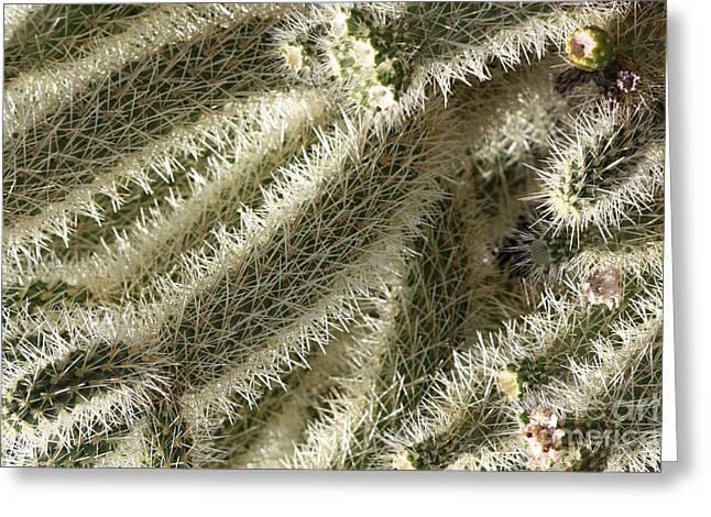 Soft Cactus Thorns Greeting Card by Carol Groenen