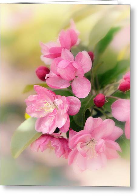 Soft Apple Blossom Greeting Card by Jessica Jenney