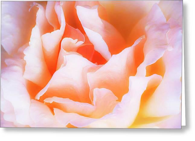 Soft Elegance Greeting Card