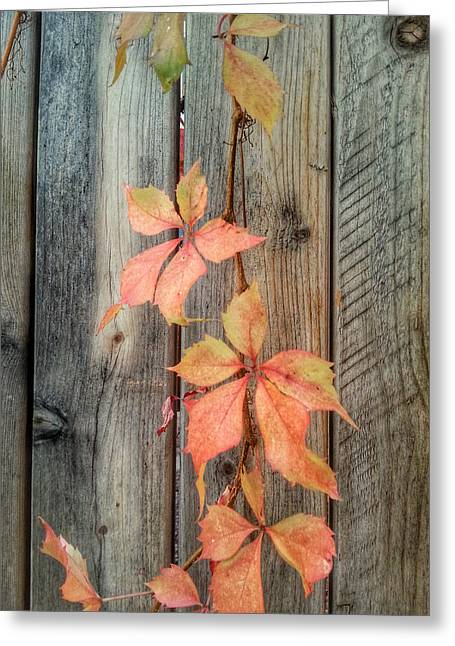 Soft Fall Colors Greeting Card