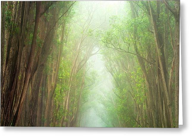 Soft Forest Light Greeting Card