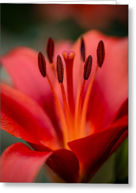 Soft Intimate View Greeting Card