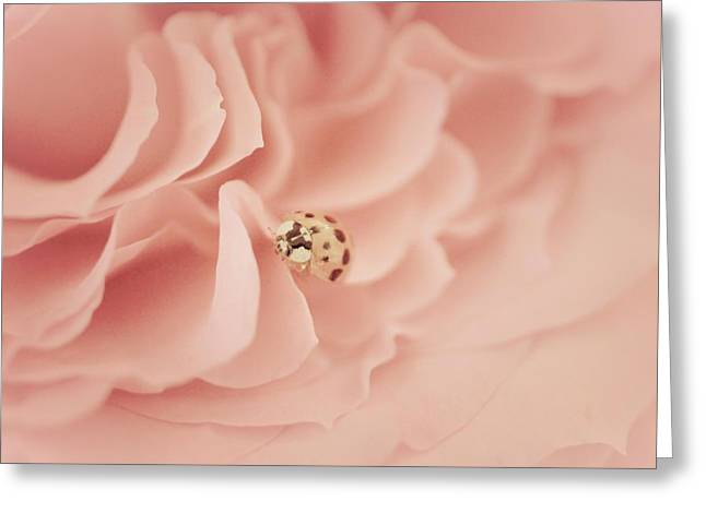 Soft Lady Of Rose Greeting Card