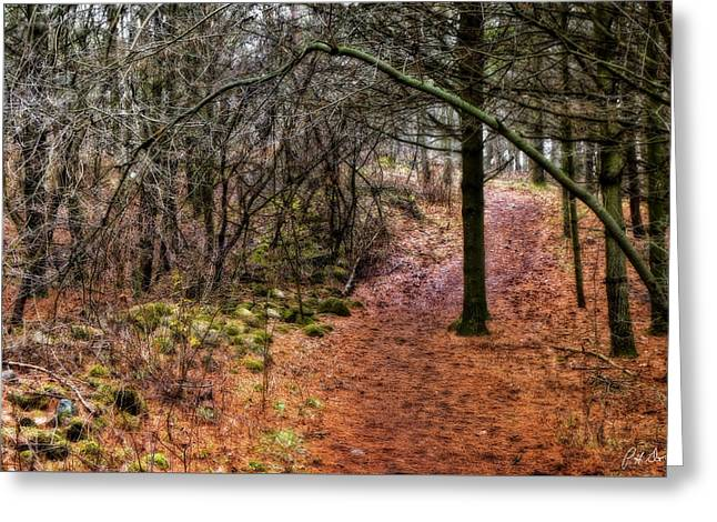 Soft Light In The Woods Greeting Card by Phill Doherty